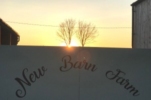 sunset at New Barn Farm Dorset