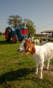goat & Tractor