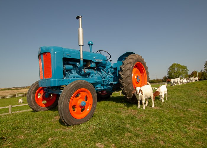 old tractor with Goats feeding